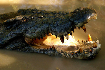 Attaqué par un crocodile, il survit en lui mettant le doigt dans l'œil