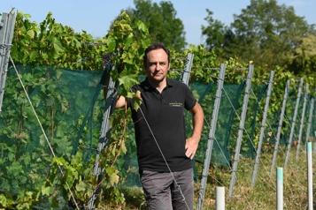 Changement climatique Le Beaujolais et le Bordelais expérimentent des solutions