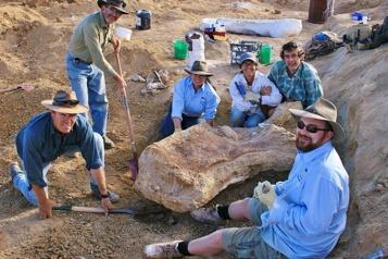Le plus grand dinosaure découvert en Australie est une nouvelle espèce)