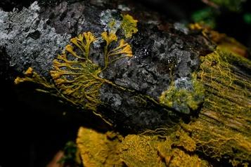 Au parczoologiquedeParis, l'étrange blob sort du bois