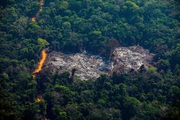 Brésil: déforestation record de l'Amazonie au premier semestre)
