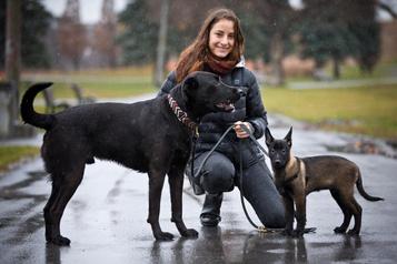 Attention aux effets du confinement sur les animaux domestiques!)