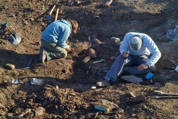 Les restes d'un nouveau petit dinosaure carnivore ailé découverts en Argentine)