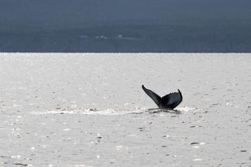 De moins en moins d'oxygène dans le golfe du Saint-Laurent )
