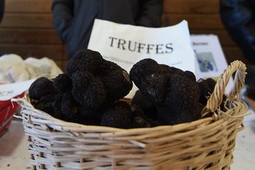 Des truffes plus chères à l'ouverture du premier marché en Périgord