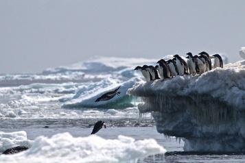 L'Antarctique a enregistré une température record de plus de 20°C