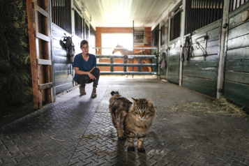 Adoptions Quand les chats prennent la clé des champs)