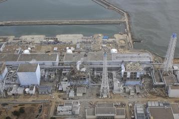 La faune s'épanouit à Fukushima