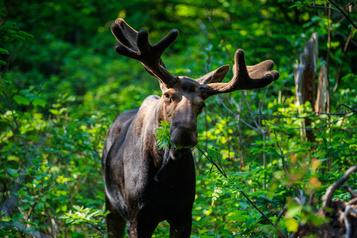 Plus de la moitié des parcs nationaux ouverts le 1erjuin)