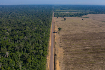 L'Amazonie pourrait disparaître d'ici 50 ans, selon une étude