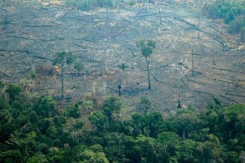 Amazonie: le G7 d'accord pour «aider au plus vite les pays frappés»