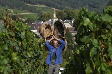 Révision de l'AOC bourgogne: les viticulteurs en colère contre l'Inao