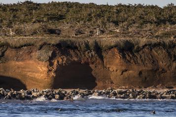 Îles-de-la-Madeleine  Une (petite) porte s'ouvre pour la chasse auphoque)