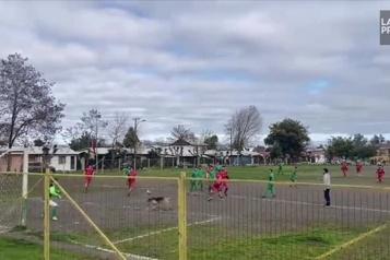 Un chien marque un but sur un coup-franc au Chili)