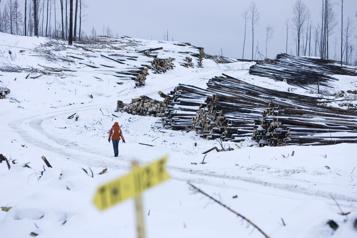 Régime forestier Le Québec se fait passer un sapin! )