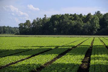 Agriculture et environnement Les bons élèves seront récompensés)