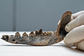 Amérique centrale Une machoire de chien, indice d'une présence humaine il y a 12000 ans?