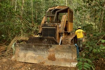 Déforestation Des dizaines de distributeurs menacent le Brésil de boycottage)