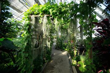 Les plantes étranges de MmeZ: mystère auJardin botanique