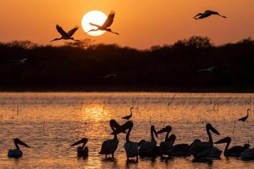 Soudan Le luxuriant parc de Dinder menacé par le grignotage de ses terres)