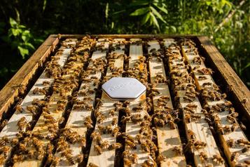 Nectar: la technologie qui fait parler lesabeilles