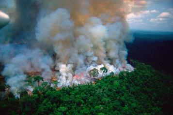 Amazonie: des personnalités contribuent à la désinformation