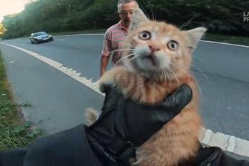 Le chaton sauvé sur une autoroute a trouvé une famille d'accueil