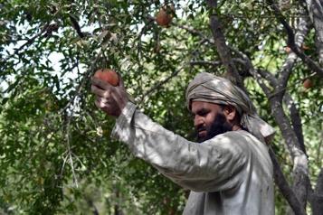 Afghanistan La saison des grenades s'ouvre sans espoir de débouchés