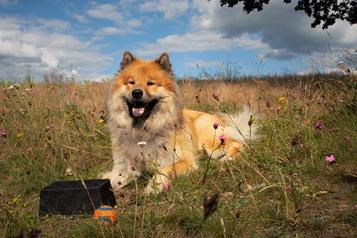 Un chien encouragé commet-il plus d'erreurs?)