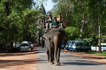 Fini les promenades à dos d'éléphant au Cambodge