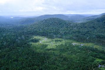 Des coupes forestières dansdes aires protégées