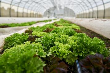 Et si Hydro-Québec et les petites fermes s'alliaient pour nourrir le Québec à l'année?