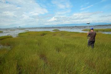 Planète bleue, idées vertes Freiner l'érosion côtière grâce aux plantes québécoises )