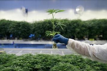 Acquisitions Bouffée de transactions dans l'industrie du cannabis)