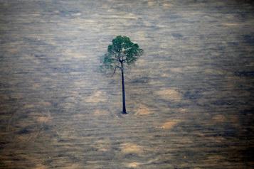 La COVID-19 chamboule l'agenda pour le climat et la biodiversité