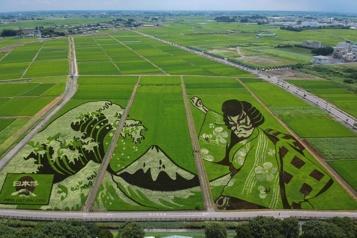 Une ville japonaise transforme ses rizières en oeuvre d'art)