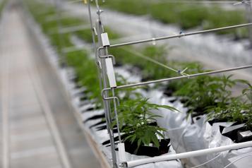 Cannabis Report du vote des actionnaires de Tilray pour la fusion avec Aphria)
