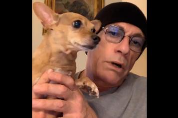 Un chihuahua sauvé par Jean-Claude Van Damme)