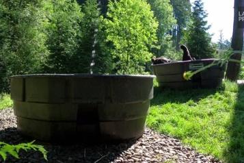 Oregon L'ours noir Takoda savoure une baignade rafraîchissante)