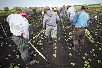 Le Canada a reçu environ la moitié de ses travailleurs étrangers agricoles)