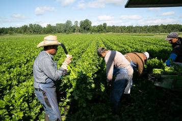 Dépistage de la COVID-19 L'UPA dénonce le système fédéral imposé aux travailleurs étrangers)