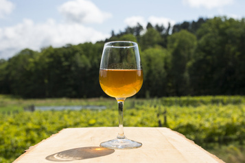Une section « vin nature » à la SAQ