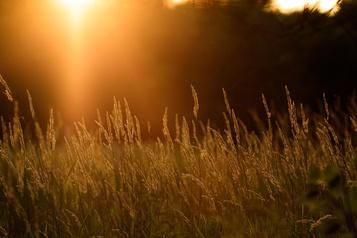 Mission photographique: les quatre saisons duparc-nature de laPointe-aux-Prairies