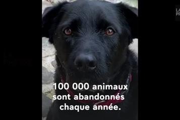 Abandons d'animaux Nemo, le chien des Macron, se met en scène)