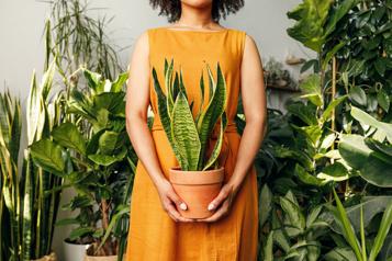 Accueillir ses employés avec des plantes)