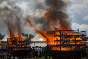 Des milliers de cornes de rhinocéros brûlées en Inde)