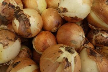 Rappel d'oignons contaminés par la salmonelle: le nombre de malades augmente)