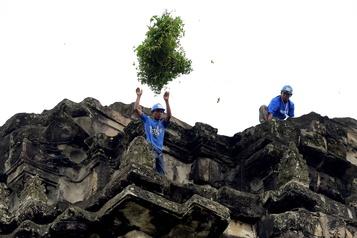 Les jardiniers-acrobates à la rescousse d'Angkor Wat)