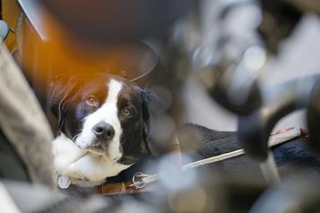 Génétique des chiens Une nouvelle étude révèle une riche histoire)