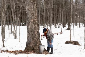Coupes forestières commerciales QS réclame un moratoire pour les érablières)